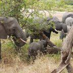 DÍA 6: Pueblo Masai y Safari por Tarangire